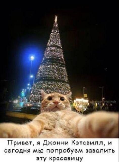 котяра елка